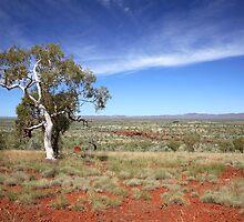 Pilbara Landscape by Shane Howlett