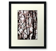 Cherry Blossoms in Spring Framed Print