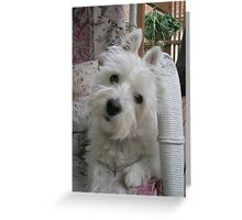 Summer Winnie Greeting Card