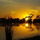 Liquid gold by Kerry  Hill
