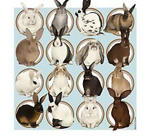 Rabbit Breeds by liarakcrane