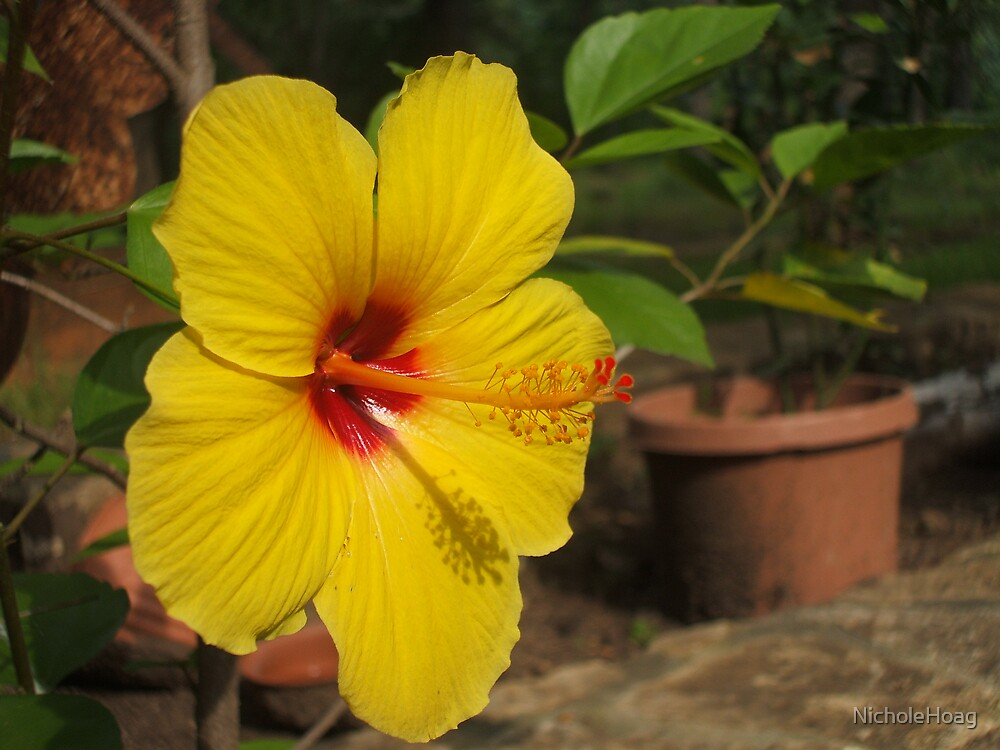Yellow Beauty by NicholeHoag
