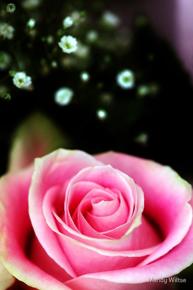 Pretty In Pink II by Mandy Wiltse
