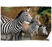 Striped Family Poster