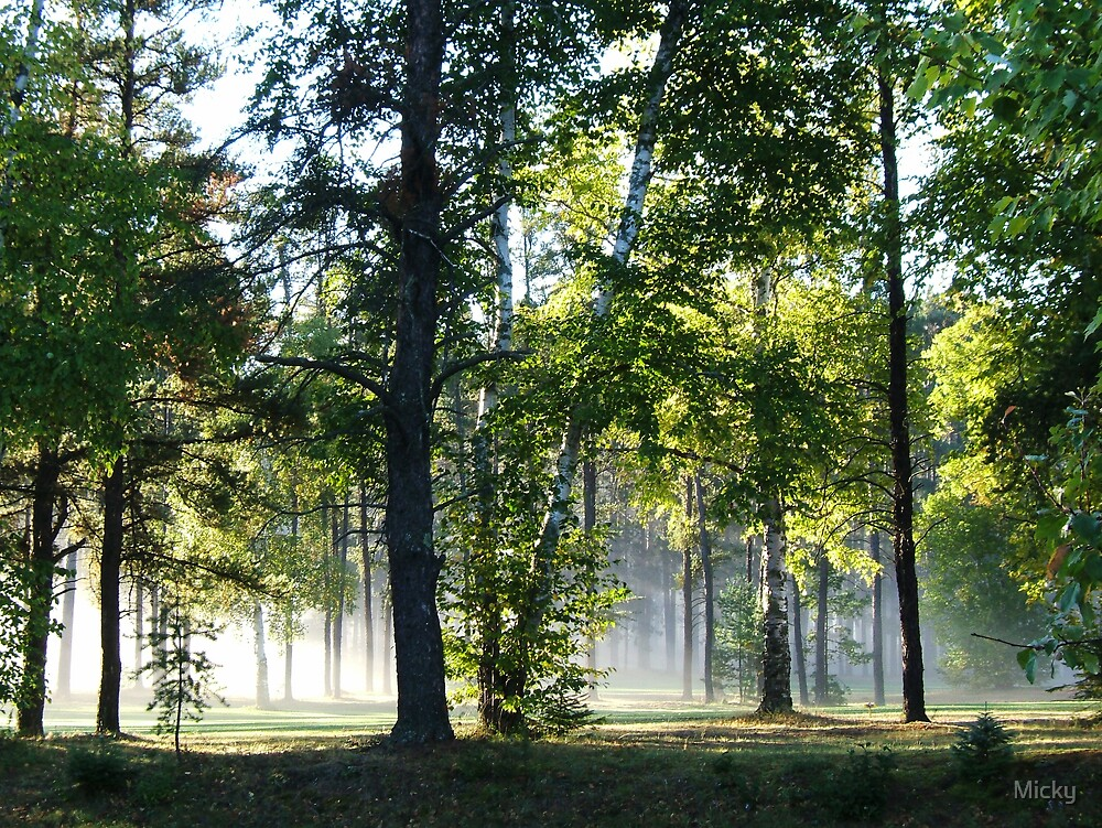 Morning fog by Micky