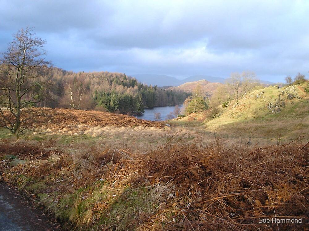 The Highlands in Autumn by Sue Hammond