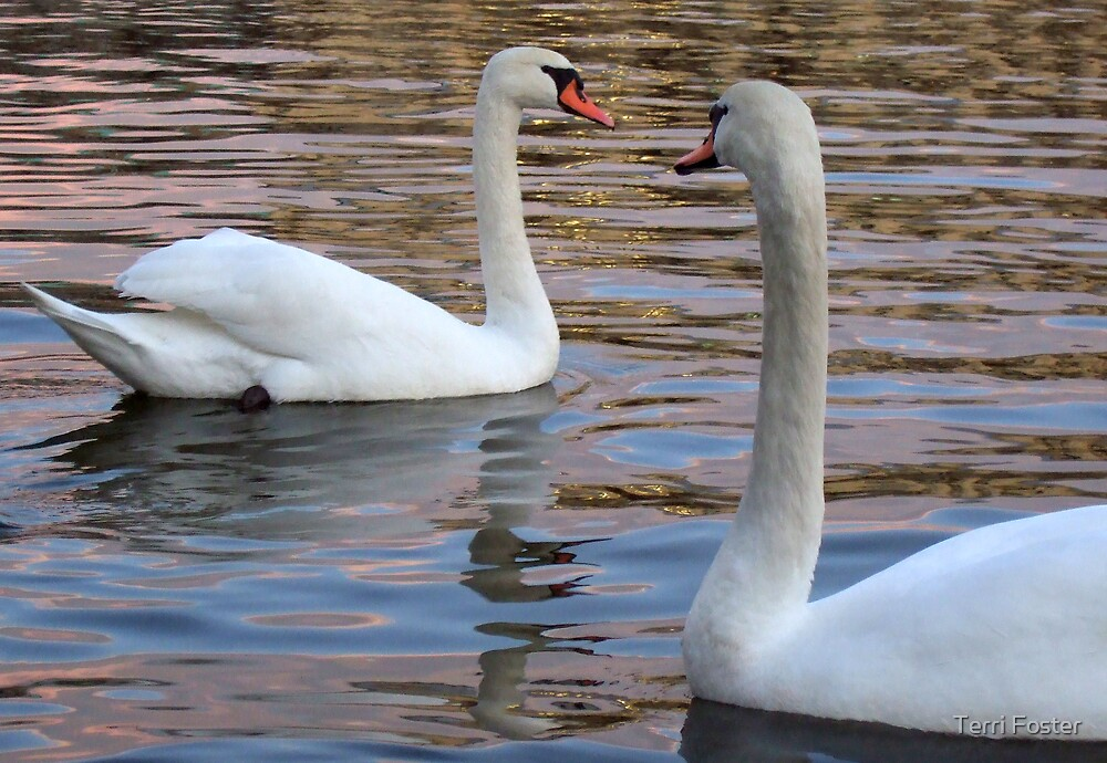 Two Swans in Prague by Terri Foster