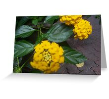 beauty blured Greeting Card