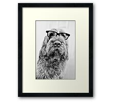 Brown Roan Italian Spinone Dog Head Shot with Glasses Framed Print