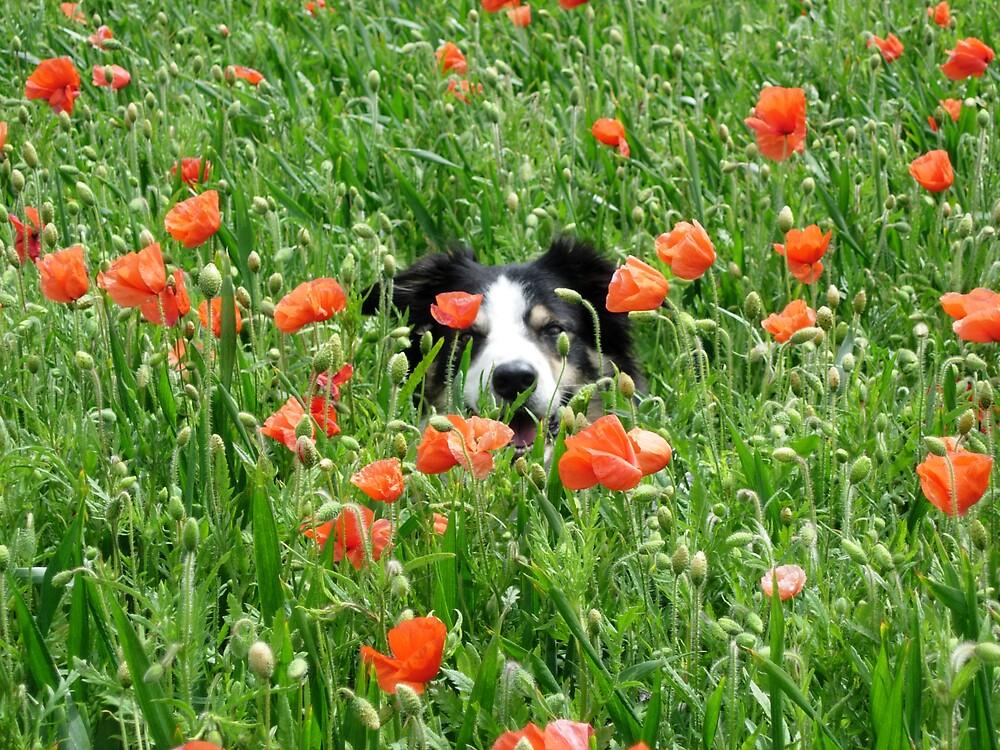 Poppy Dog by Monster