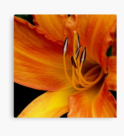 Flower Over Filling with Passion Canvas Print