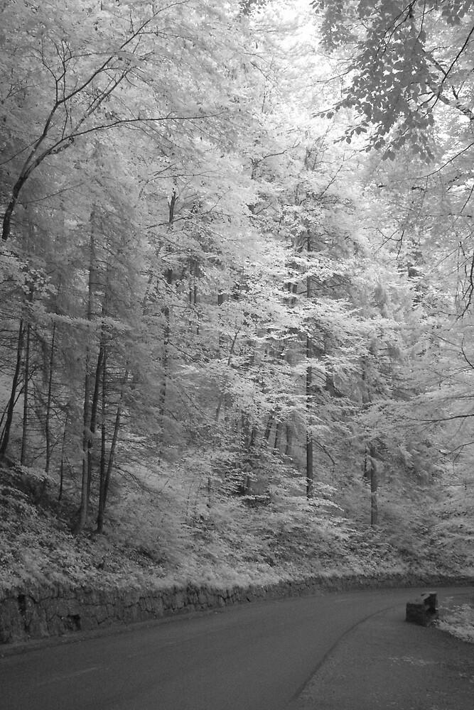 Forest near Neuschwanstein castle by Trent Wallis