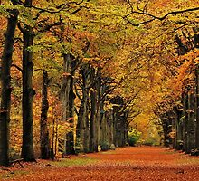 Walking through autumn's colour palace again by jchanders