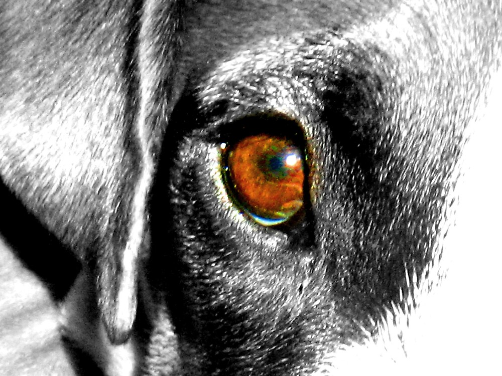 Colored Eye Dog by Tommy Seibold