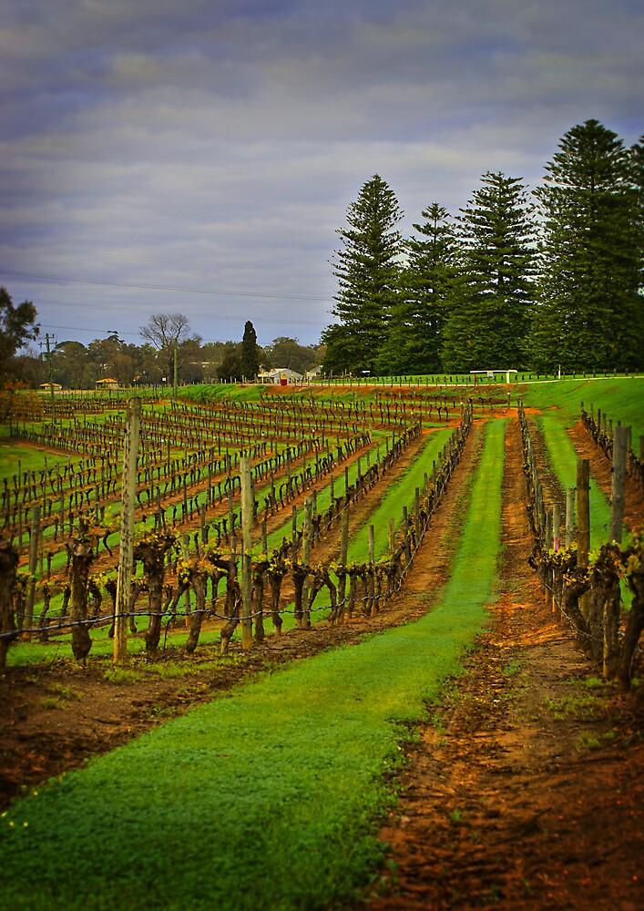 Vines by alistair mcbride