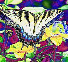 Crazy Butterfly by David Cortez