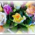 Soft Roses by Rachael Taylor