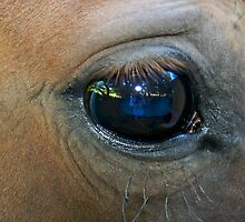 Self portrait of me as seen through the eyes of a horse. by Deri Dority