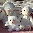 Sheeps by AnnDixon