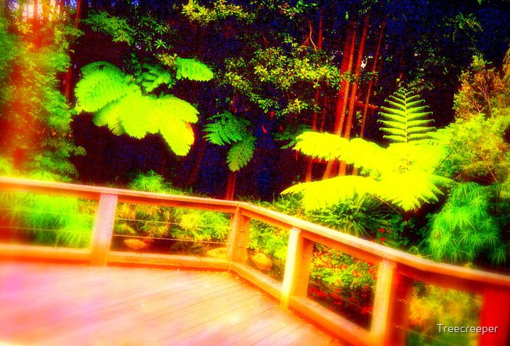 Ferns by Treecreeper
