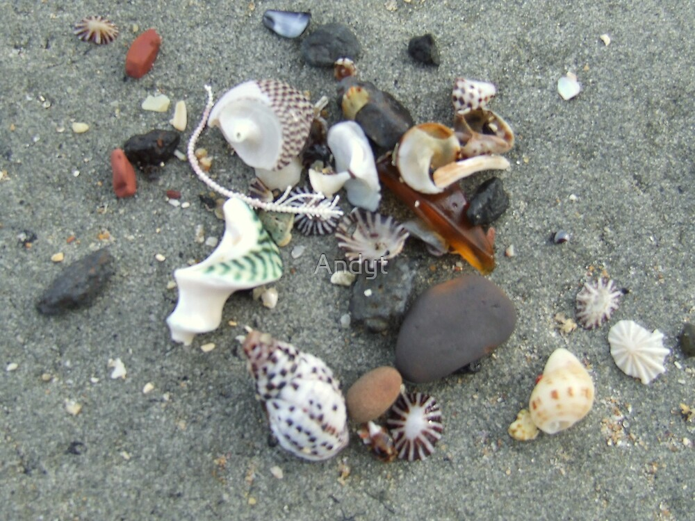 shells on rock by Andrew Turley