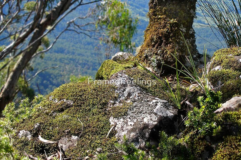 Mossy View by FramedFeelings