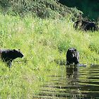 3 Black Bears by Rebanne