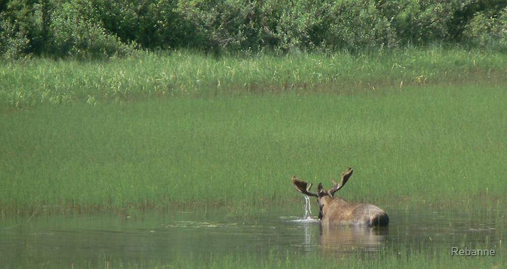 Big Bull Moose by Rebanne