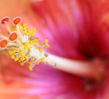 Stamen by Karen Adams