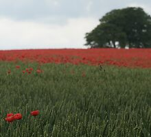 Poppies and lonely tree by Catherine Hunt
