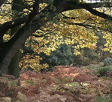 Autumn Walk in the Forest of Dean by Catherine Hunt