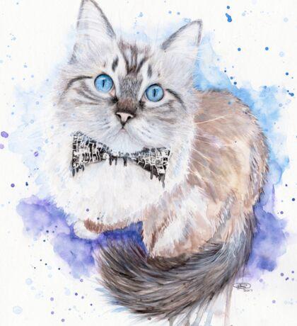 watercolour ragdoll cat Sticker