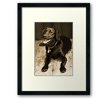 Black Lab Sepia Framed Print