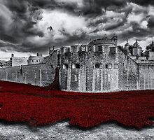Tower Poppies by Stuart  Gennery