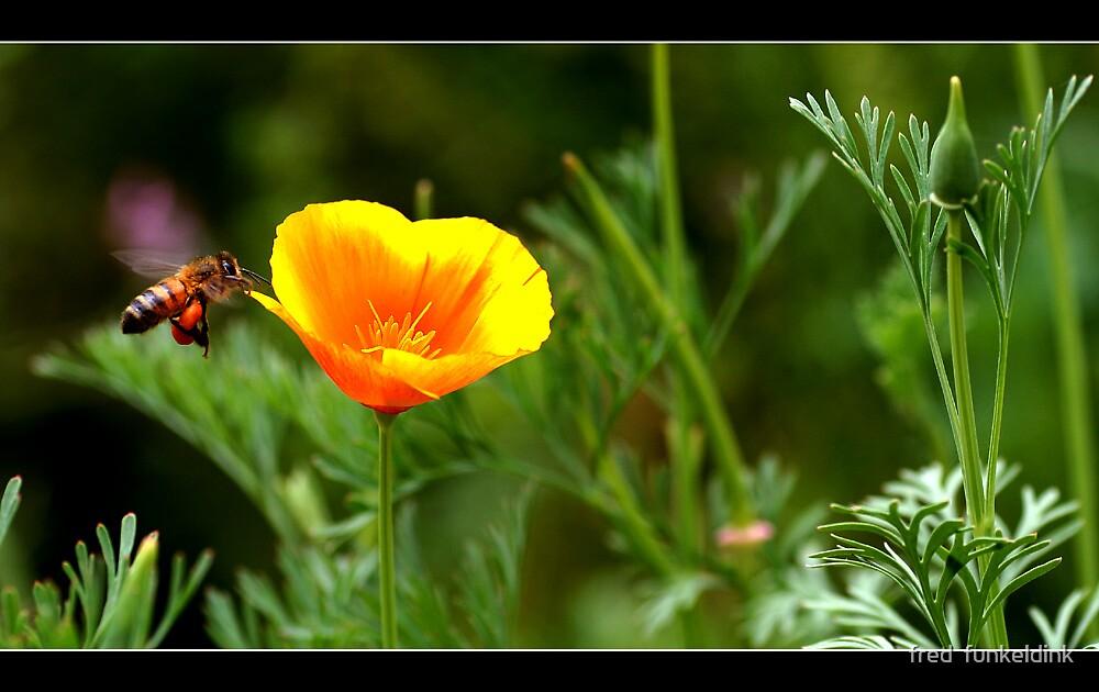 pollen by fred  funkeldink
