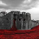Poppies at the Tower by Stuart  Gennery