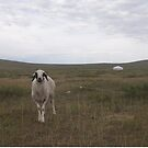 Sheep and a Mongolian Ger by Philip Seifi