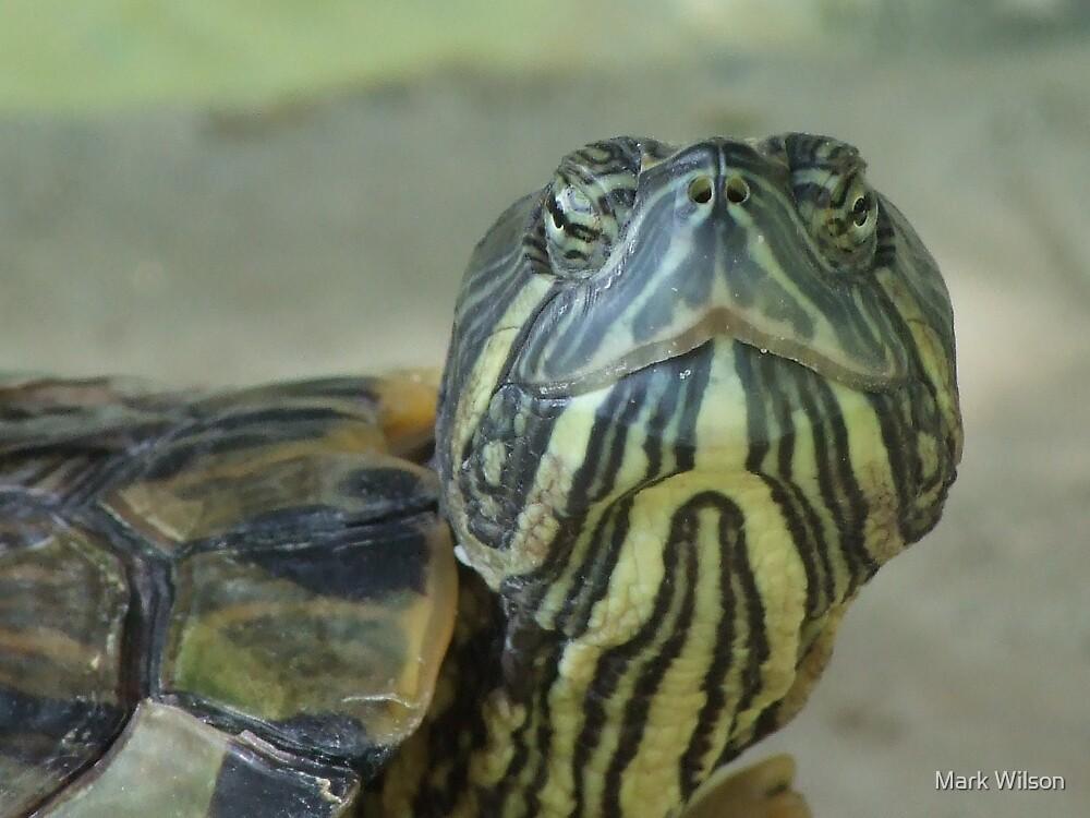 Turtle Macro by Mark Wilson