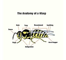 The Anatomy of a Wasp Photographic Print