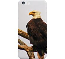 Eastern United States Bald Eagle iPhone Case/Skin