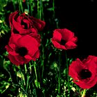 Red Painted Poppies by kalliope94041