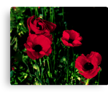 Red Painted Poppies Canvas Print