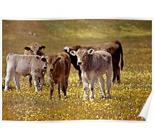 Calves and Flowers Poster