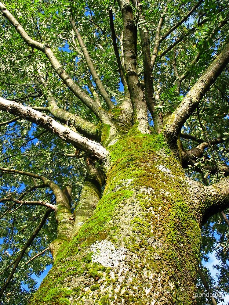 The WOW tree by wondawe