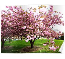Spring in New York City Poster