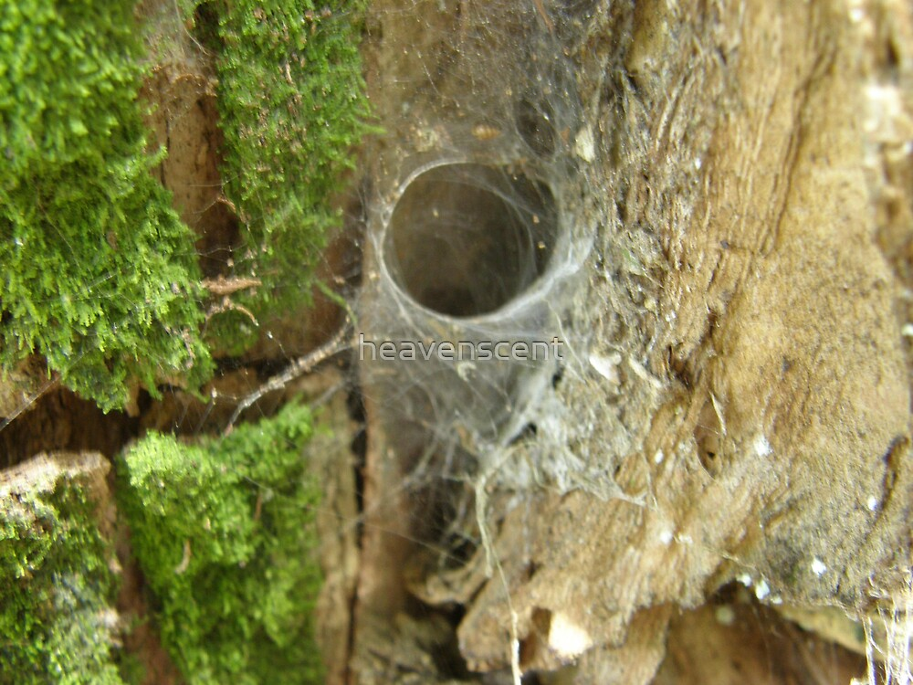 Cobweb by heavenscent