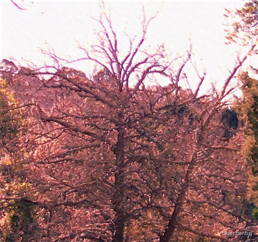 Autumn tones by bluecountry