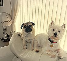 The Westie and the Pug ! by Bill Lighterness