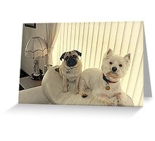The Westie and the Pug ! Greeting Card
