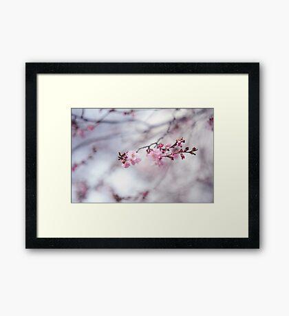 Glimpse of Spring Framed Print
